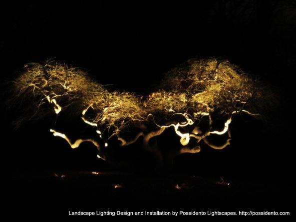 Possidento_Lightscapes_landscape_Lighting_097-002